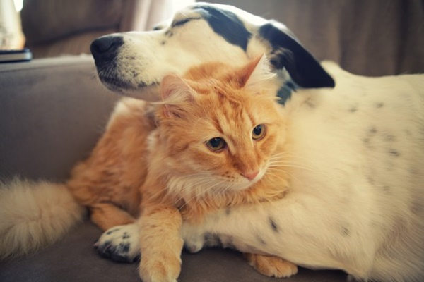 20-Interesting-Differences-Between-Cats-and-Dogs-3.jpg