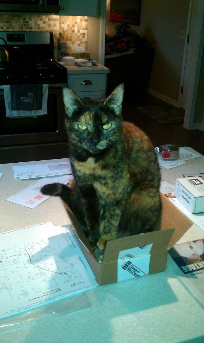 Cat in a box.jpg