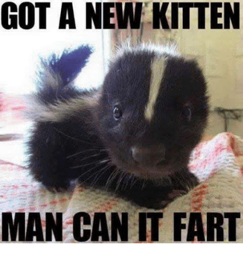 got-a-new-kitten-man-can-it-fart-3797920.png