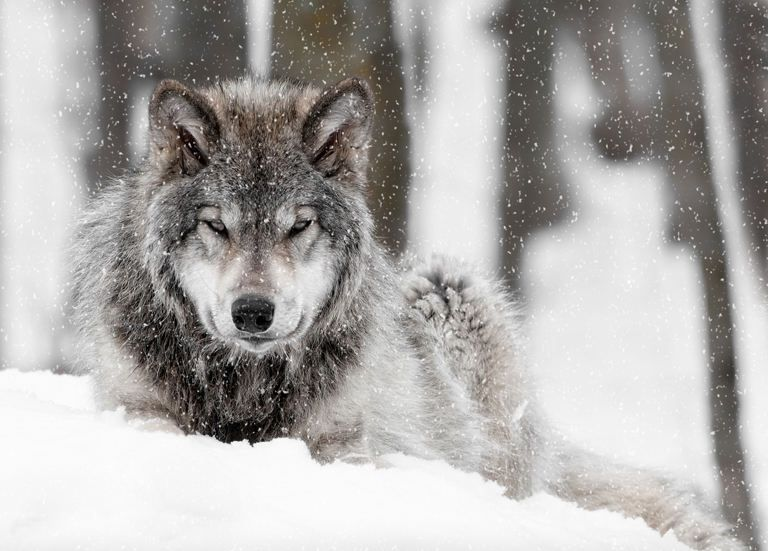 Wolf Pictures 014.jpg