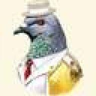 a_pidgeon